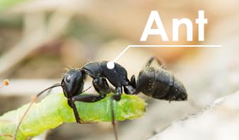 フォトショップのカスタムブラシで蟻の行列を描く